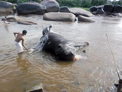 Washing the Elephant in Hampi