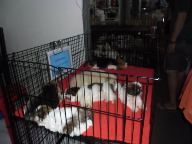 Puppies for sale at the Chatuchak Market