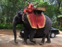 Elephant leaving Angkor Thom