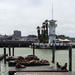 Pier 39 Seals and Lighthouse