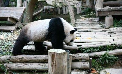 ChiangMai Zoo