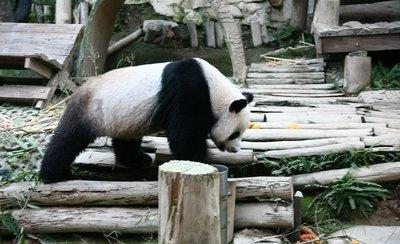 chiang mai zoo, Chiang Mai