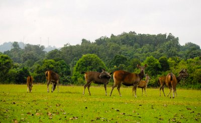 Khao Yai Park, Nakornratchasrima