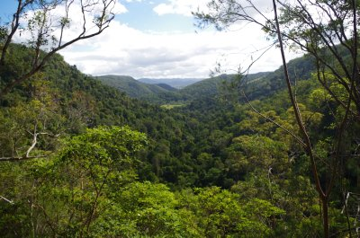 View from the Kondalilla Falls track