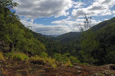 View from the top of the Kondalilla Falls