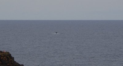 Another whale off Kiama