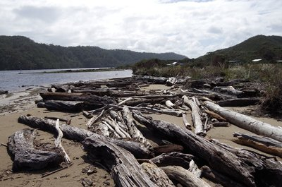 These are probably the logs that washed the Fat Man away in the last flood.