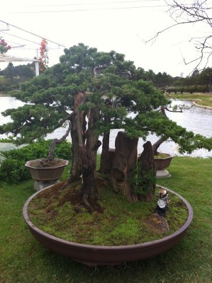 Another cool bonsai tree