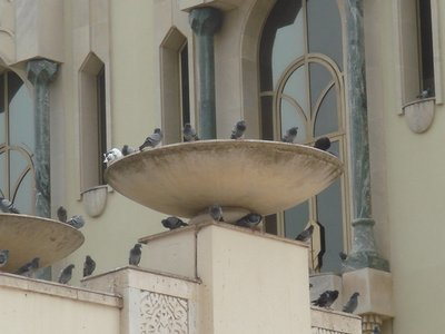 Pigeons at Hassan II Mosque