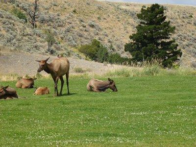 Yellowstone_056.jpg