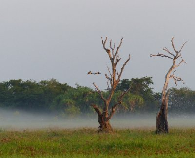 Mist over the billabong