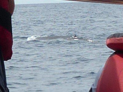 That's a pretty big whale
