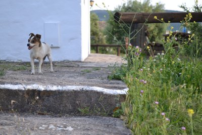 Blanquita the dog in algar