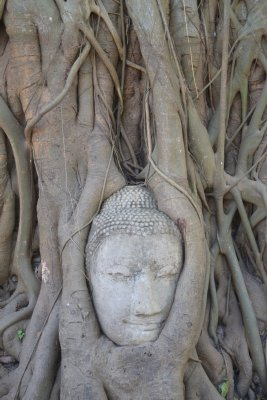 Buddha's head in tree roots Ayuthaya