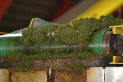 Tea manufacture process, BOH Tea Estate