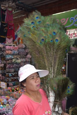 Peacock feathers for sale