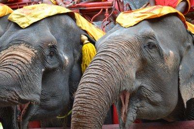 Elephants in Ayuthaya