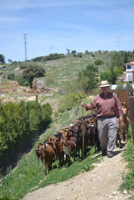Goatherd on the Via Verde