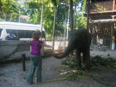 Temple elephant at Gangaramaya temple Colombo