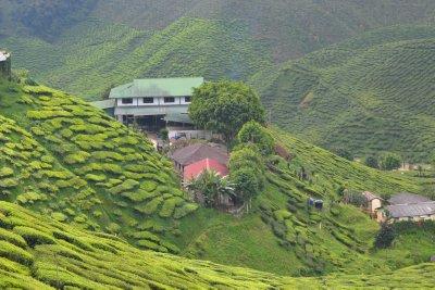 Tea estate and accommodation