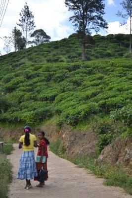 Walking through tea plantations, Ella