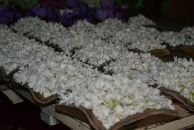 Jasmine for sale as offerings - smells gorgeous
