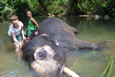 mahout with raja