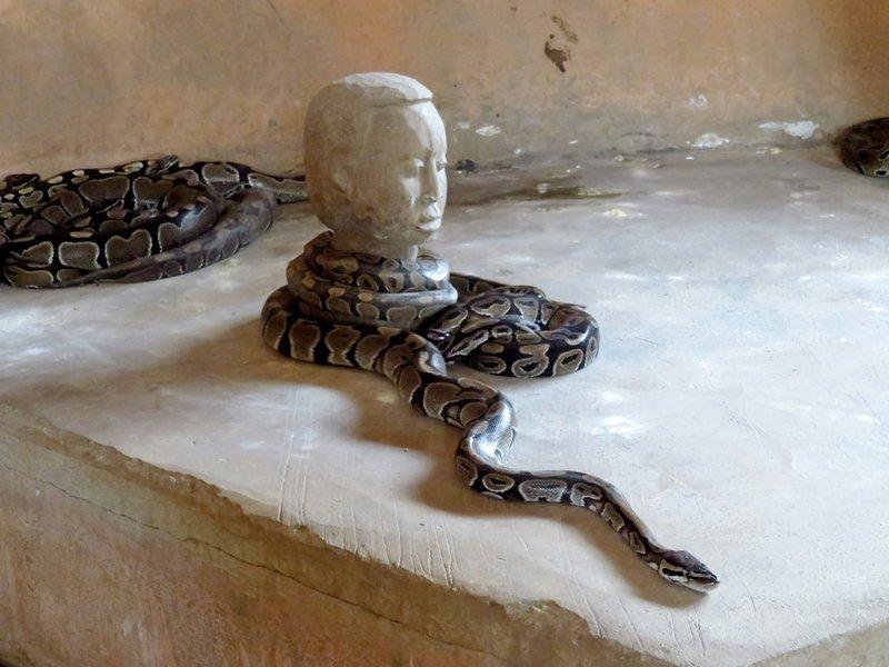 Python around Head