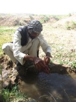 Afghan Farmer Washing Grapes