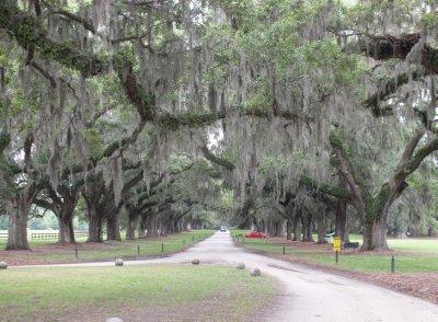 Longest driveway in South Carolina on Boone Hall