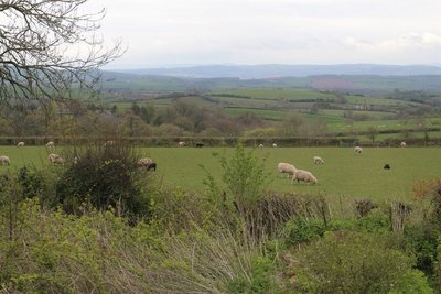 View of Devon from our lounge window at The Cobblers, Pennymoor