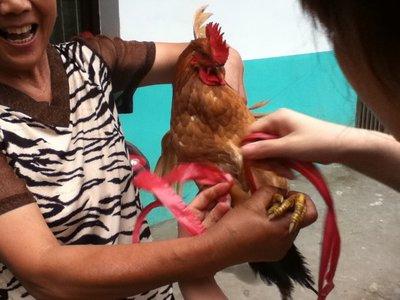 Tying the Chicken
