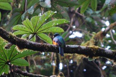 Monteverde_149.jpg