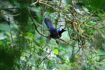 Monteverde_167.jpg