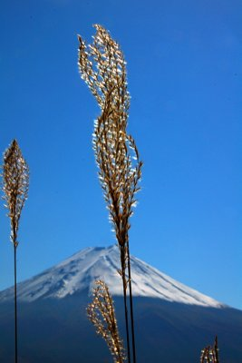 FUJI_10.jpg