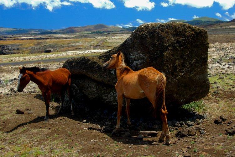 Horses befriend a fallen Moai