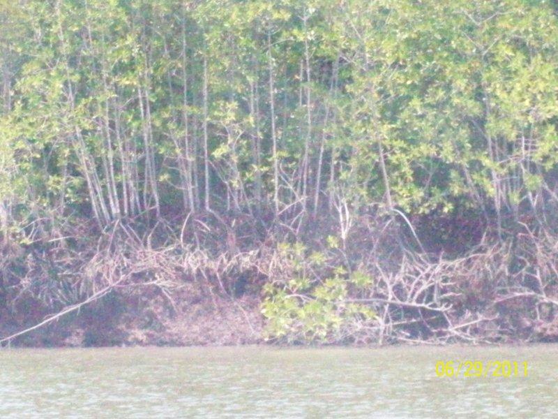 Trees, Pulau Ketam