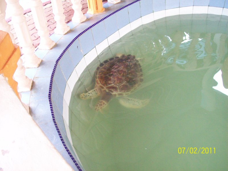 Turtle Rescue, Cherating, Malaysia