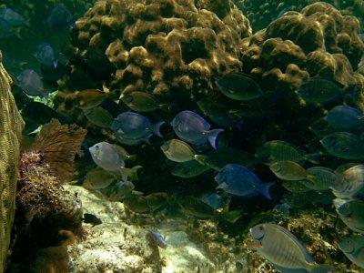 reef_fish.jpg