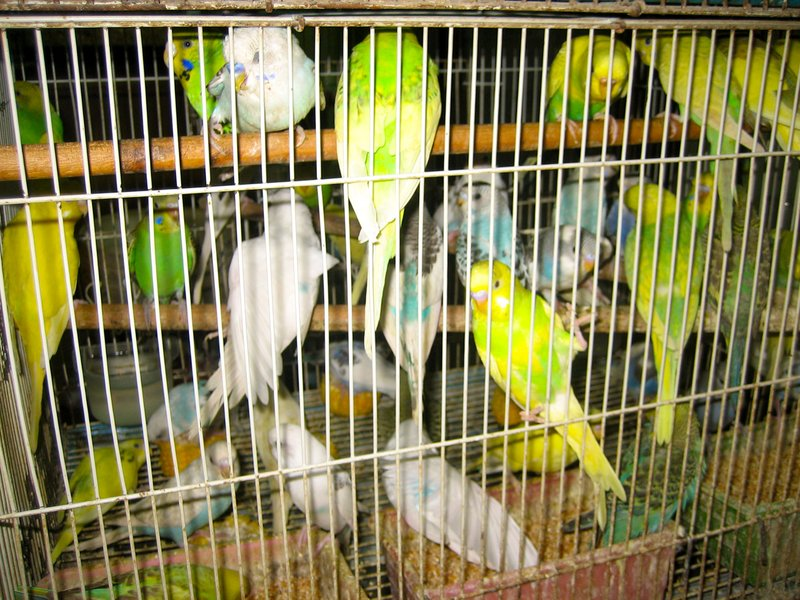 These were too many birds in too small a cage for me