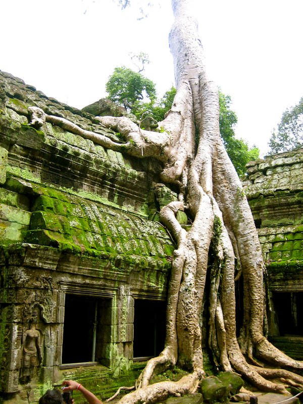 Roots swallowing a structure in Ta Prohm