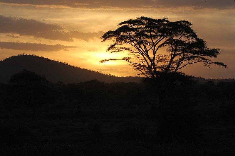Sunset over the serengetti