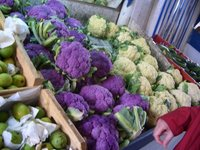 Purple Cauliflowers...