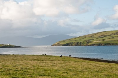 View of Dingle Harbour from B&B