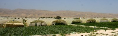 Green houses stretch along the length of the river Jordan, providing a stark contrast to the dry landscape they are set in