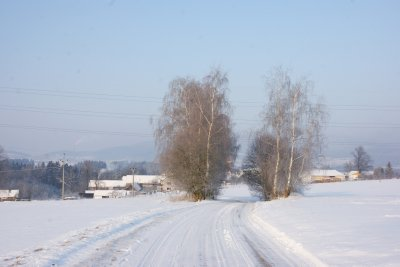 Country road to Cernice covered in show and lined by frost-covered silver birches