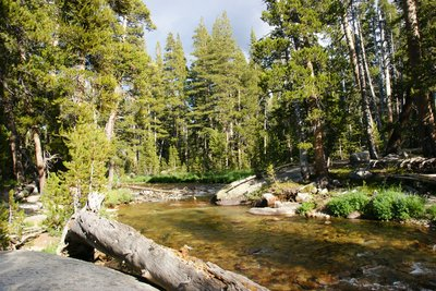 Tuolumne River in late afternoon sun, Yosemite Park, California
