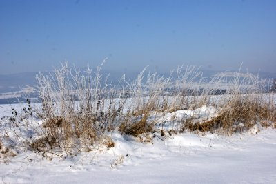 Frosted grasses sparkling in the early morning sun and -30 degrees celsius