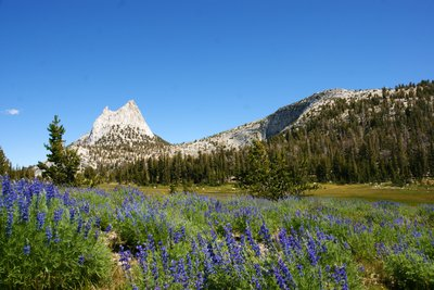 Flowering meadows along the John Muir Trail, Yosemite Park, California, US