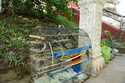 Cages of swallows at the Wat Phnom hill